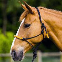 CAVEZZA IN CORDA CON NODI E LUNGHINA COLOR HORSEMANSHIP