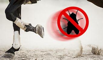 Contro le Mosche e Zanzare